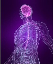Anatomy and Physiology Course - 3 weekends ITEC registered